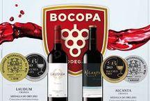Nuestros Vinos / Our Wines