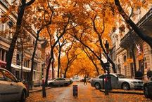 Fall/ Autumn / by Kimberly
