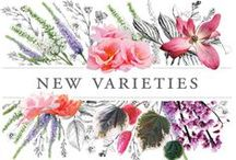 New Introductions for 2016 / Beautiful, unique, and proven to thrive