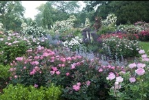Knock Out® Rose Combinations