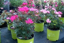 Potted Plants / Be sure to look for our green pots!