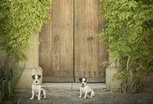 ~Doors~