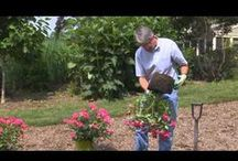 Knock Out®Roses: How To / Planting, pruning and caring for your Knock Out®Roses