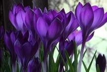 Gorgeous Garden Ideas / ♡ Working in the garden... ♡  / by Carol Klassen Reynolds