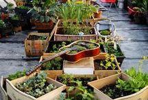 Gardens / by Kidfresh Foods