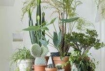 Outdoor/plants