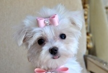 Adorable Pets and Other Animals / Animals / by Lisa Darras