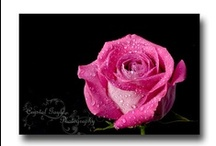 CGP Decor - Flowers / Floral prints and gifts created by Crystal Gayle Photography