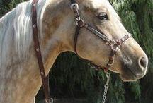 Dream Horses / Horses, for me, are like oxygen. / by Janine Schmidt