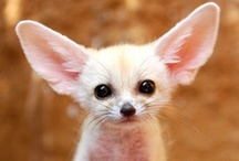 Cuteness! / by Dana Wright