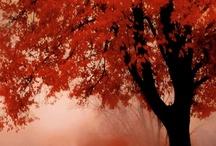 Naturaleza día a día...estación a estación.... / Naturaleza que nos encandila con sus colores...con su luminosidad...con su omnipotencia....pero que también nos abruma con su fuerza y con su frialdad...