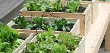 Grow Your Food / Guide to helping you start your own gardens so that you can take charge of where your food sources are coming from. Also includes information on nutrition through real food.