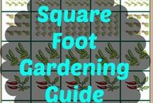DIY Gardening / Tips, tricks and ideas for growing your own fruits and veggies.