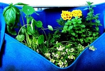 Garden Container Ideas / How to contain that wonderful garden...from the fanciful to the practical...