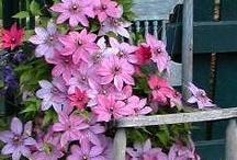 Flower Love / always pretty flowers