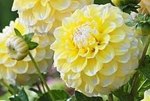 Yellow & White : HG Quick Design / having a color palette in mind can make your garden that much more peaceful and harmonious....it also helps you make decisions about what plants to buy.