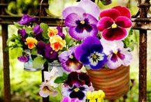 zzz Becky & Ken's Beautiful, Fragrant, Drought-tolerant, Southern Garden