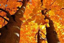 """Autumn / """"Autumn seemed to arrive suddenly that year. The morning of the first September was crisp and golden as an apple..."""" ~J.K. Rowling, Harry Potter and the Deathly Hallows"""