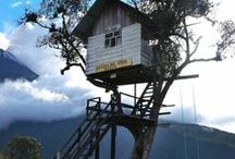 """Tree Houses / """"Someone told me I was immature. Guess who's not allowed in my tree house now???"""" ~Unknown"""