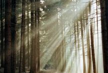 """Crepuscular Rays / """"Gorgeous, glowing rays of light...This was what true beauty and goodness looked like-- a spectral, luminescent gathering of beings so pure it hurt to look directly at them, like the most glorious eclipse, or maybe Heaven itself."""" ~Lauren Kate, Fallen"""