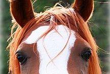 Horses.. Horses ... Horses / Horse