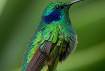 peacocks, and hummingbirds!! / by Barbara Chu