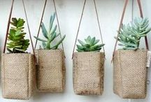 Green thumb / by Jessica Cooney
