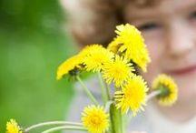 Wildkräuter ernten und sammeln / Wildpflanzen, Blätter, Blüten, Kräuter, Beeren, Nüsse, Wurzeln und vieles mehr