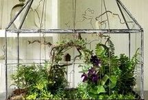 The Graceful Gardener / Elegant ideas for connecting with nature & enhancing our living spaces with glorious greenery.