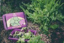Family Gardening! Herb, Veggie, Fruit & Flower Gardening for everyone!