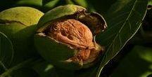 Wildkräuter-Kalender Oktober / Wildpflanzen-Erntekalender für den Monat Oktober