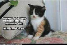 cat stuff / by Joyce Sachs
