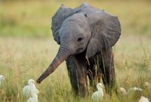 Animals / by Irina Ivanov