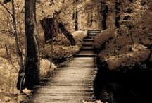 Paths & Roads / by Elpida Dimou