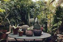Garden / by Cassie Clarke