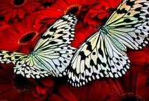 Animals - BUTTERFLIES, Moths & Caterpillars / by Cassandra Andrea