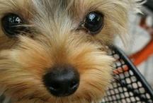 Puppy! / by Tiara Nichole