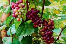 A013 - FRUTAS / Presentamos la historia y características de una de las familias más importantes de la nutrición humana, el trabajo de investigación que realizo en el Instituto de los Andes sobre las frutas, dura ya muchos años de ardua y apasionante labor, ya que existen miles de frutas... cada una mejor que la otra... claro esta que mi preferida es la sin par chirimoya... jaimeariansen@outlook.com / by Jaime Ariansen Cespedes