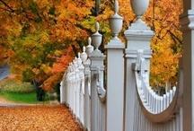 Autumn / by Sophie Setzer