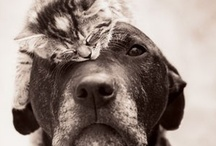 Best friends (Juli) / by Juli Subrin
