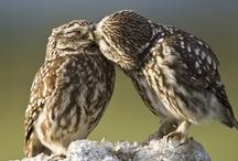 Owls / by Amanda Bonser