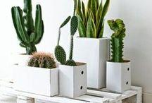 Pots & Planters / by Katerina Pateli