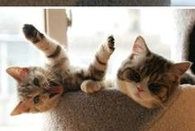 Cat Kind / Cats cats cats