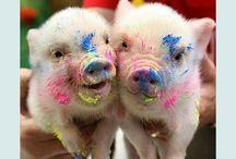 Piggies / by Natalie Anderton