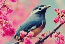 birds / by Julie Lautrop