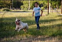 #American #Bulldog / by ForDogTrainers.com