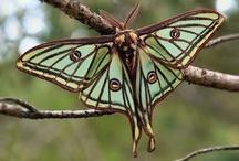 BUGs/butterflies / by Cara Wolf-Vaughn