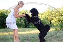 #Black #Russian #Terrier / by ForDogTrainers.com