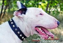 #Bull #Terrier / by ForDogTrainers.com