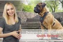 Professional #Dog #Harnesses / Dear dog owners, this board is dedicated to one of the most comfortable types of dog gear - harness. We are happy to present you endless list of leather and nylon harnesses, made with love and care for your pet. Like how certain harness looks on the dog? Click and order for your pet! / by ForDogTrainers.com